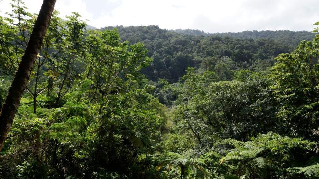 dominica-green-rainforest