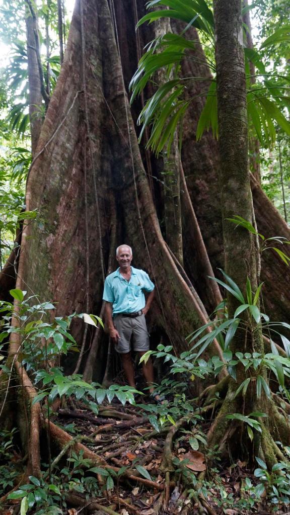 rain-forest-big-tree-2
