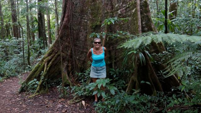 rain-forest-big-tree
