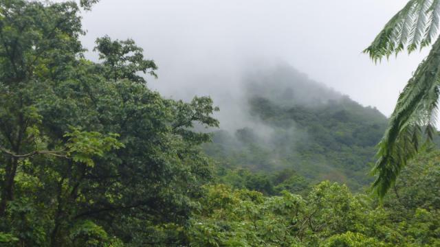 rain-forest-dominica-1
