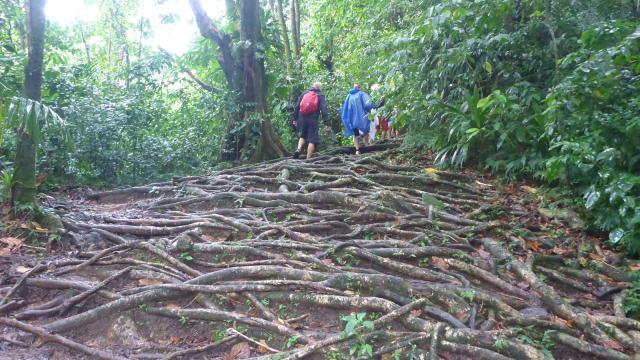 rain-forest-roots-1