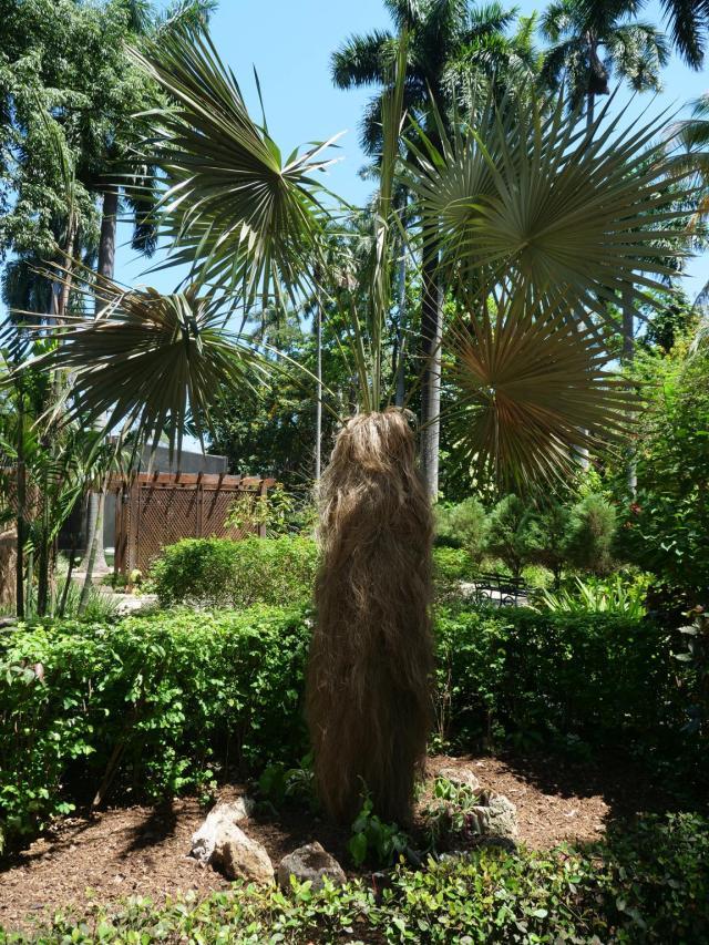 Botanic Garden Havnna 2