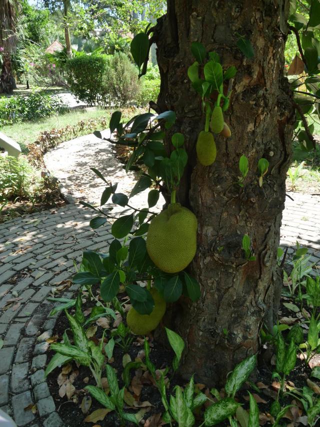 Botanic Garden Havnna 3