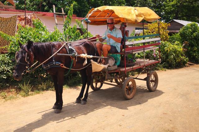 Horse Taxi 2