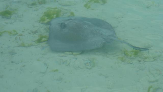 Staniel Cay fish